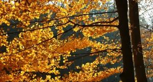 Можно ли отдохнуть осенью на свежем воздухе у себя в саду?